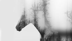 Double Exposure • Forest • Horse •