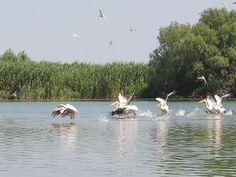 Delta Dunarii Danube Delta, Romania, Country, Animals, Birds, Hot, Inspiration, Biblical Inspiration, Animales
