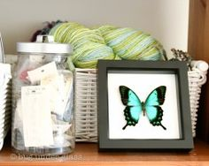 real-preserved-butterfly-display