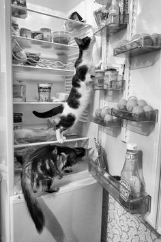 Refrigerator inspection by Alexandr Maximov on 500px