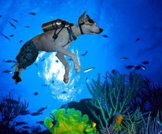 Even Dogs Dig Scuba Diving