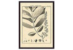 Vintage Botanical Study VI on OneKingsLane.com