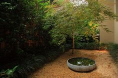 Water bowl under Japanese Maple in gravel bed