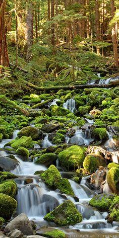 Olympic National Park Rainforest, Washington State