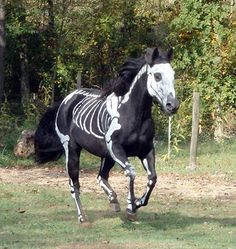 Sandy Cramer transformed her black horse into a skeleton for Halloween. Headless Horseman could ride it.