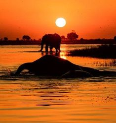 Days end . Put this magical place on your bucket list. Chobe National Park, National Parks, Destinations, Pet Friendly Accommodation, Victoria Falls, Destination Voyage, Game Reserve, Park Hotel, Beautiful Places In The World