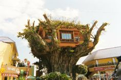 Restaurant in a tree., Okinawa, Japan