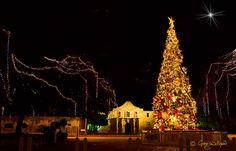 Alamo Plaza has a huge Christmas Tree that dwarfs the size of the Alamo behind it. Alamo San Antonio, San Antonio Riverwalk, Christmas In America, Christmas Lights, Christmas Tree, Christmas Stuff, Family Road Trips, River Walk, Texas Travel
