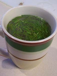 Pine Needle Tea contains 4-5 times the Vitamin C of fresh-squeezed orange juice, and is high in Vitamin A. It is also an expectorant (thins mucus secretions), decongestant, and can be used as an antiseptic wash when cooled. So not only does it taste good, but it's good for you!