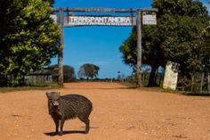 Visiting the Pantanal from Cuiaba, Brazil | Brendan's Adventures