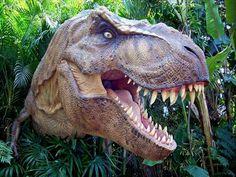 Des dents longues et tranchantes, une mâchoire imposante, un cou puissant… le tyrannosaure disposait du nécessaire pour piocher des morceaux...