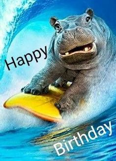 Hippo Surfing Funny Birthday Card Greeting Card by Avanti Press Cute Hippo, Baby Hippo, Baby Animals, Funny Animals, Cute Animals, Funny Animal Photos, Funny Pictures, Funny Birthday Cards, Happy Birthday