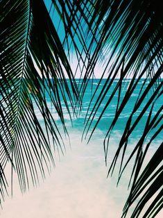 Pin by ✧ charli ✧ on tropical in 2019 пальмы, пляж, океан. Venice Beach, Tropical Paradise, Summer Paradise, Mellow Yellow, Beautiful Beaches, Summer Vibes, Summer Beach, Ocean Beach, Summer Sun