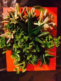 Cuadro verde con suculentas