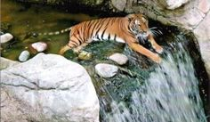 Fort Worth Zoo Exhibits