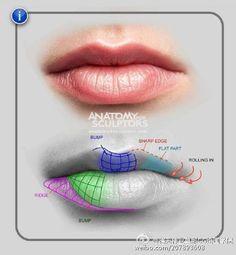 Facial Anatomy, Head Anatomy, Body Anatomy, Anatomy Drawing, Anatomy Art, Body Drawing, Zbrush Tutorial, Anatomy For Artists, Anatomy Tutorial