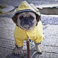 Doggy Rain Coat