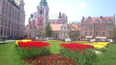 Plac Kolegiacki cały w kwiatach | Kolegiacki square full of flowers