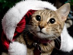 Examples of Christmas Photography Christmas Animals, Christmas Cats, Merry Christmas, Christmas Pictures, Christmas Stuff, White Christmas, Christmas Time, Funny Dogs, Funny Animals