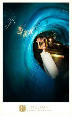 Bride and groom, FLORIDA AQUARIUM Wedding, Limelight Photography, Wedding Photography stepintothelimelight.com