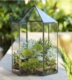 #InspiredGreenLiving - Mini-  Garden Terrarium. We thank the foul air of early 19th-century London for inspiring physician Nathaniel Ward to invent a defense against pollution for his beloved ferns. His solution: an enclosed glass structure that lets in light, promotes growth and protects tender leaves - the beloved terrarium.