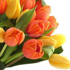 Resultado de imagen de tulipanes naranjas