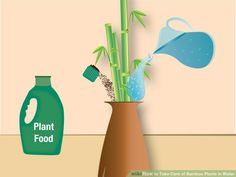 How to Take Care of Bamboo Plants in Water: 7 Steps
