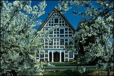 Lovely traditional house, Altes Land, Niedersachsen (Lower Saxony) Germany,  in spring