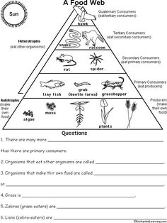 Ecological Pyramid Worksheet Food pyramid, food chains and cartoon on pinterest