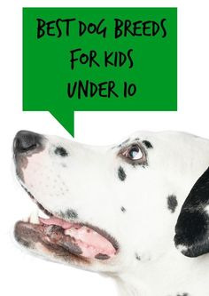 If youre planning to bring a new family friend home for your children, check out this list of our picks for the best dog breeds for kids under 10 years. Dog Breeds List, Best Dog Breeds, Best Dogs, Dogs And Kids, Animals For Kids, Dogs And Puppies, Doggies, Dogs 101, Hush Puppies