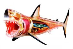 The kid in me that was fascinated with sharks and dinosaurs really loves this 3D anatomy model...