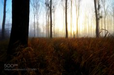 December morning by info3131. Please Like http://fb.me/go4photos and Follow @go4fotos Thank You. :-)