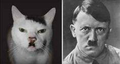 Ecco un video divertente di gatti identici al viso di personaggi famosi: ci sono ben 61 casi #gatti #animali #vip