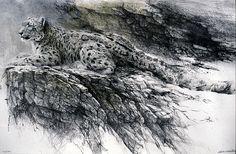 snow leopard | Celebrity Screensaver Wallpaper Picture Theme: Snow Leopard Picture
