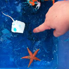 Hidden sea creatures in Blue Jelly: a huge hit this morning during outdoor learning time. Esecomb