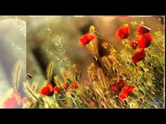 Abraham Hicks ~ Heaven Is Living In The Present & Being Happy - YouTube