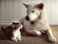 cute Jacob cat and Ezzy dog Edmonton Humane Society
