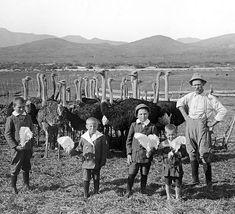 Early #ostrich #farmer in #oudtshoorn