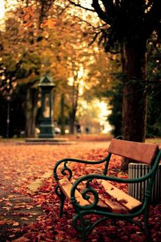 leaves, autumn, and fall image Fall Is Coming, Dslr Background Images, Autumn Scenes, Autumn Aesthetic, Autumn Photography, Best Seasons, Fall Pictures, Autumn Inspiration, Belle Photo