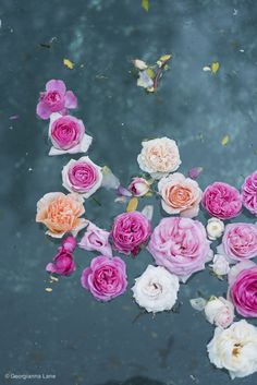 Floating Roses in Central Chile by Georgianna Lane http://georgiannalane.com/2014/11/floating-and-flying-in-central-chile.html