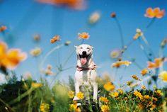 암을 이겨낸 개 글루타의 언제나 웃는 얼굴(사진)   The Huffington Post