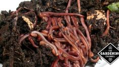 A Guide to Composting in an Apartment