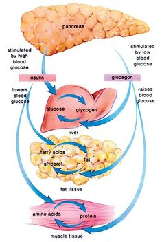 Natural Herbal Cure Diabetes *** Details can be found by clicking on the image.