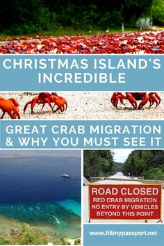 Why you need to witness the Great Crab Migration