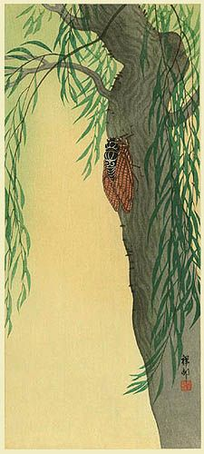 Cicada on Willow  by Ohara Koson, 1930  (published by Watanabe Shozaburo)