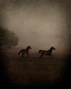 2 HORSES 44.jpg (1140×1434)