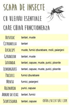 Cum m-am batut cu tantarii si am infrant! Natural Sleep Remedies, Natural Cures, Natural Skin, Types Of Warts, Reverse Cavities, Root Canal Treatment, Skin Growths, Oral Surgery, Useful Life Hacks