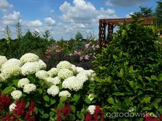 Ogród prawie romantyczny - strona 566 - Forum ogrodnicze - Ogrodowisko