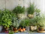 Use fresh herbs from your garden to make a cleansing wash for Mabon.