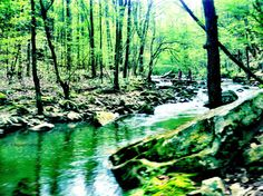 Tennessee Nature Creek and Trees Green Scenery by RepeatClothing, $10.00